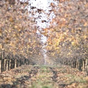 Mezőgazdaság nélkül nincs talpraállás