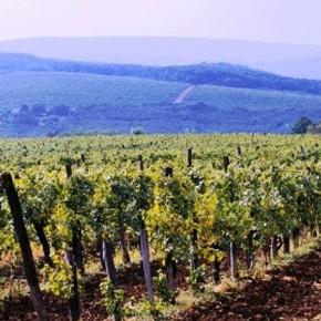 Szövetségben a szőlő- és a bortermelőkkel