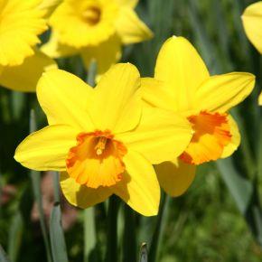 Nyitrai Zsolt virággal köszöntötte a hölgyeket