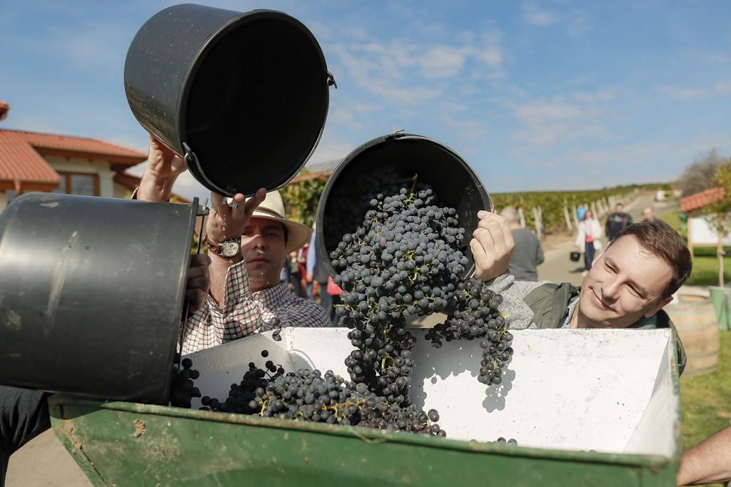 A kormány támogatja a minőségi bortermelést