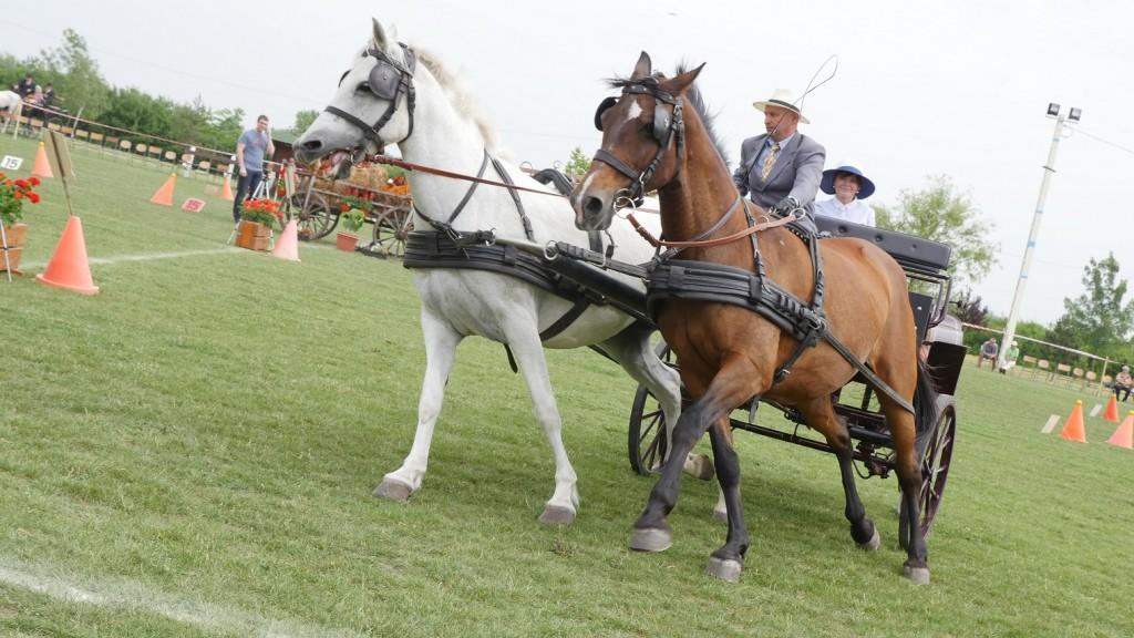 Először rendeztek lovasversenyt MezőtárkánybanElőször rendeztek lovasversenyt Mezőtárkányban