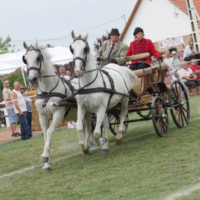 Először rendeztek lovasversenyt Mezőtárkányban