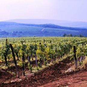 Egyedi egri borospalack a Mokkában