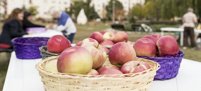 Másfél tonna almát osztottak szét Egerben
